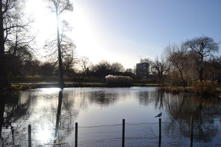 Queen Mary's Garden - Regent's Park - London - UK
