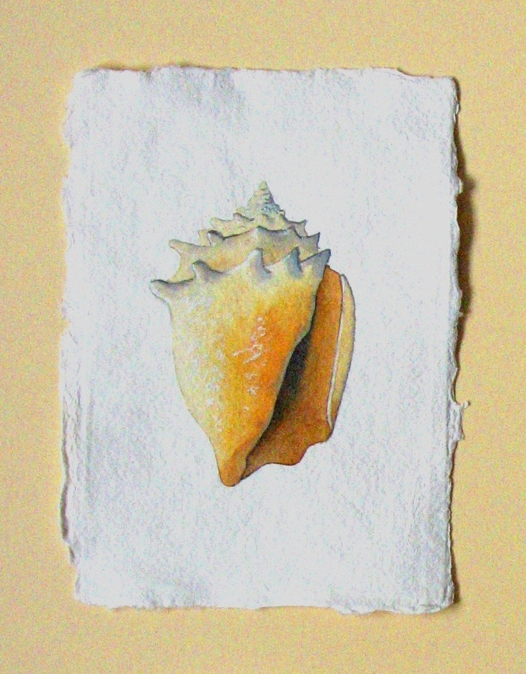 Sea shell watercolour original painting illustration for Eggshell yellow paint