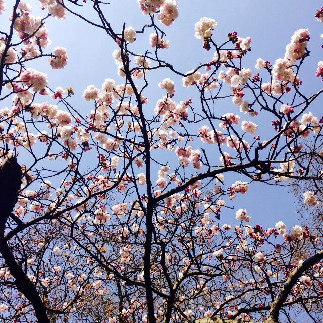 Spring in London  my photo