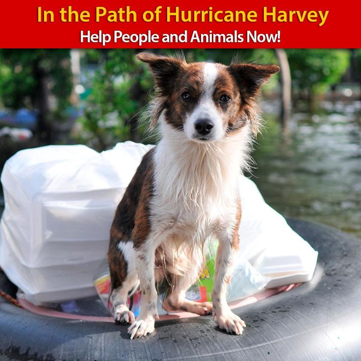 People and Pets in the Path of
