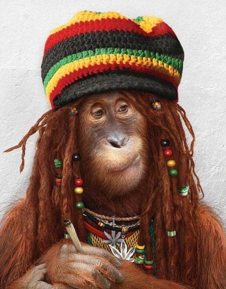 Humour Singes. Photos d'humour de chimpanzés blagueurs, images ...