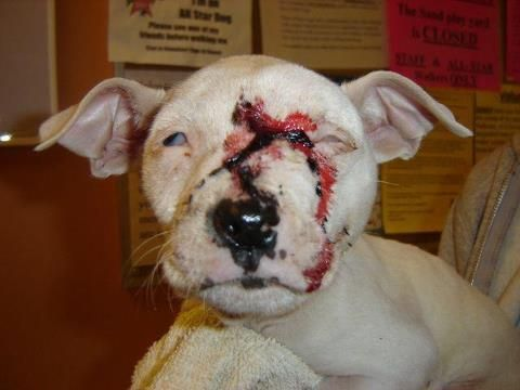 Dog fighting, in and of itself is a heinous crime. What may be surprising to find out, however, is the idea that others are encouraging dog fighting by offering instructional videos about the activity. YouTube.com, the world's largest video sharing website, features videos depicting dog fights and material related to it.  Read More/Sign Petition:  theanimalrescuesi...