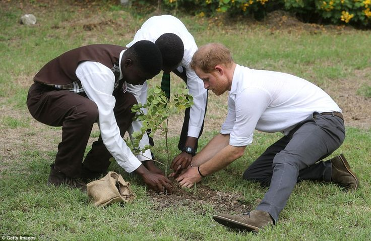 Prince Harry plants a tree during the unveilingof the dedication to The Queen's Commonwealth Canopy and Arbour Day Fair