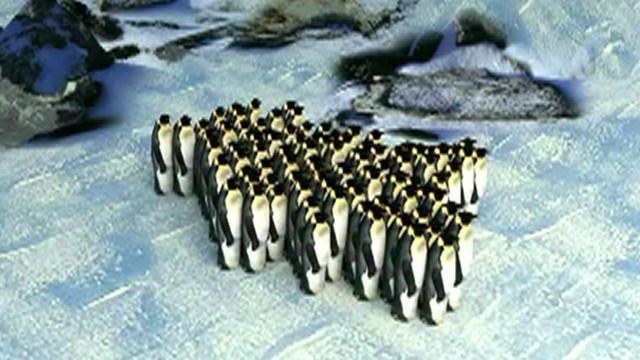 Vea el movimiento grupal de los pingüinos emperadores