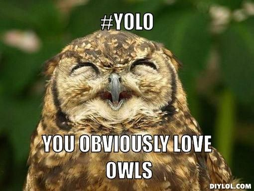 yolo....the only time i will ever use that phrase