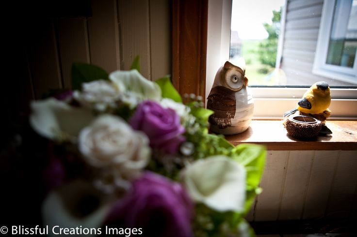 blurry flowers in the foreground, sharp owls in the background.  Great detail shot for a coffee table book