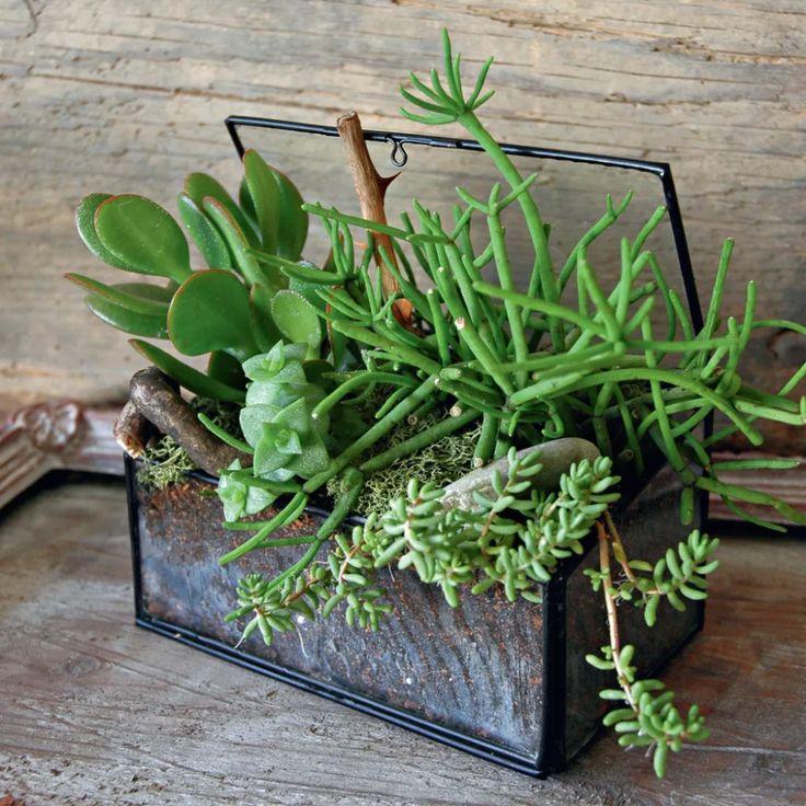 Comment fabriquer un terrarium chez soi ? - CDeco.fr | Planter des fleurs, Terrariums, Idées ...