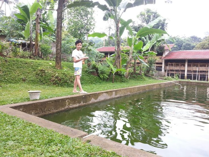 Fishing the gold fish