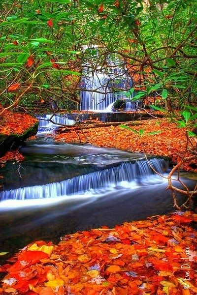 Amazing Waterfalls in USA -Grogan Creek Waterfalls-North Carolina- USA                                                                                                                                                      More