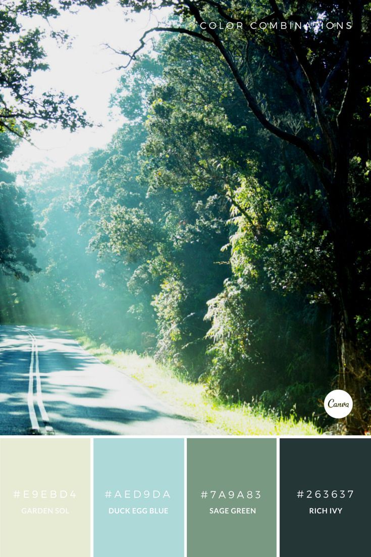 90 best Canva images on Pinterest | Color palettes, Color ...