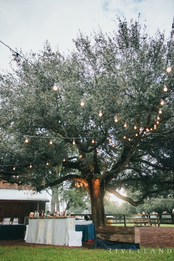 Oak and Lights