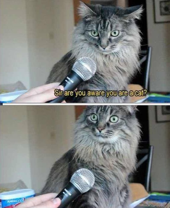 Sir are you aware you are a cat? #catoftheday
