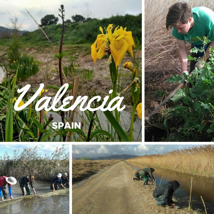 Volunteer in the wetlands of Spain!