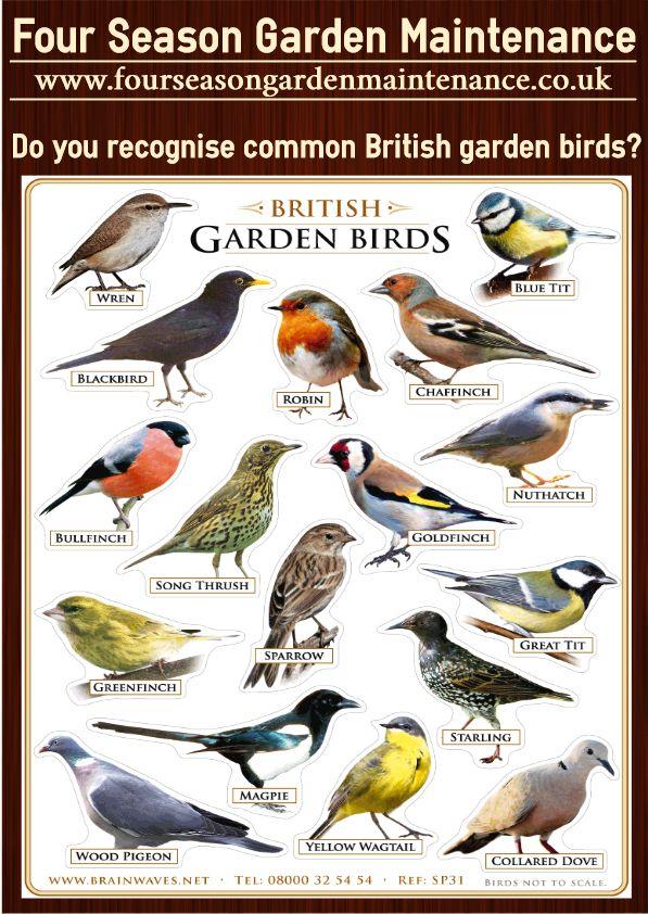 Common British garden birds. Teach you children ...