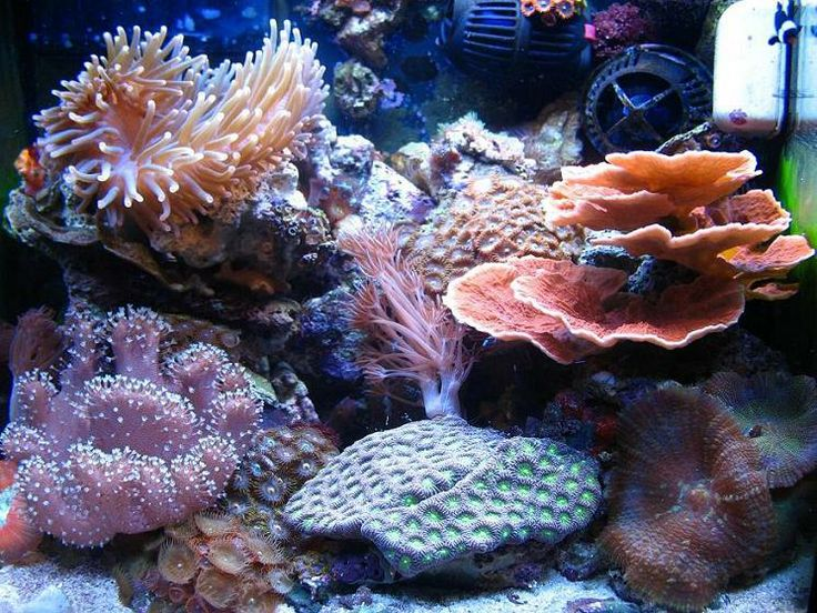 36 best nano reef tank images on pinterest nano reef