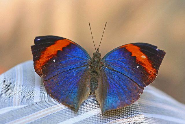 129 Best Images About Butterflies On Pinterest