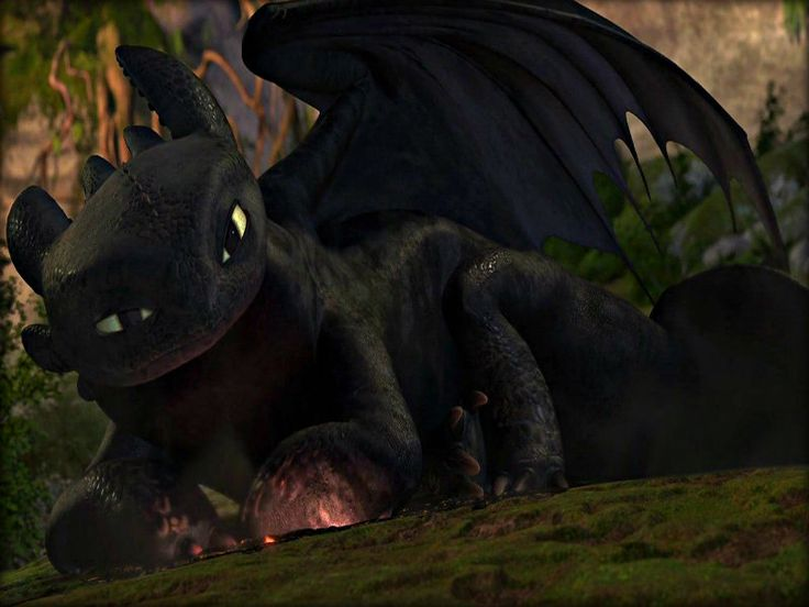 http://images6.fanpop.com/image/photos/32900000/-Toothless-how-to-train-your-dragon-32987270-800-600.jpg