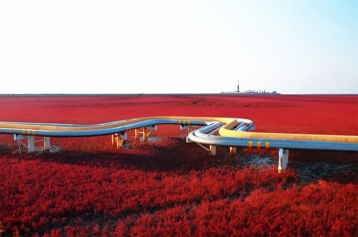 Kırmızı Plaj, Panjin, Çin: Kırmızı Plaj (Red Beach), Çin'de Panjin City'nin 30 kilometre güneybatısında, Liaohe Nehri Deltası'nda bulunmaktadır. Adını tuzlu-alkali topraklarda yayılan deniz otu türünün görünümünden almaktadır. Nisan-Mayıs aylarında büyümeye başlayan bu otlar, yaz boyunca yeşil kalır. Sonbaharda ise kırmızı-alevli renge dönüşür ve kırmızı bir plaj manzarası oluşturur. Kırmızı Plaj, bir doğa rezervi olduğu için -küçük bir bölümü hariç- halka kapalıdır.