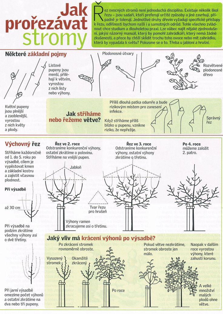 Prořezávání stromů 1