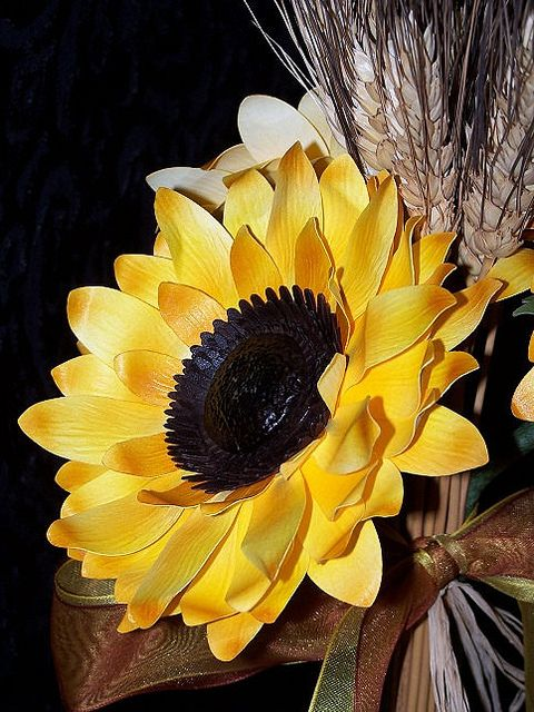 Best sunflowers daisies images on pinterest
