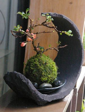 Japanese moss ball bonsai -Japanese flower arrangement (ikebana), which evolved in Japan over seven centuries, has its origin in early Buddhist flower offerings. This art is distinguished from purely decorative use of flowers by the extreme care taken in choosing every element of each work, including the plant material, the container, where each branch and flower is placed, and how the branches relate to the container and the surrounding space.