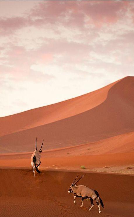 h-agiofobia:      Photograph byMikael Stiller-Oryx, Namibia.