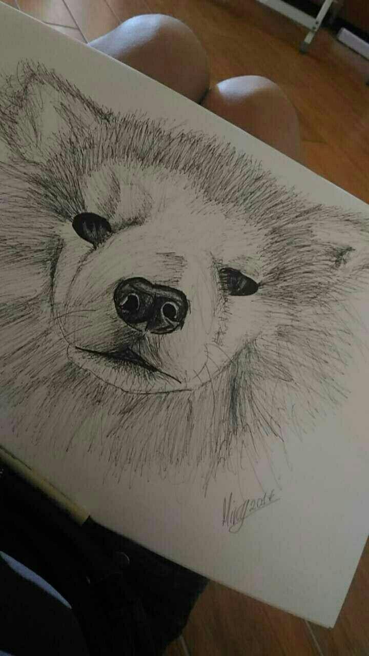 Kinu #akitainu#dog#mydog#pen#bic#work#kinu