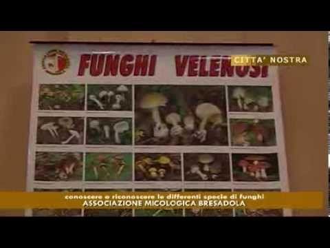 Funghi velenosi: gli esperti dell'A.M.B insegnano a riconoscerli
