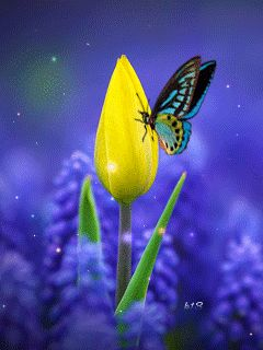 Animated Tulip and Butterfly flowers butterfly animated gif blossom tulip