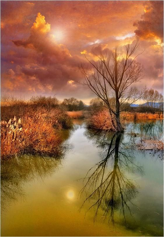 HDR Photography by Jean-Michel Priaux | Cuded Water tree sunset