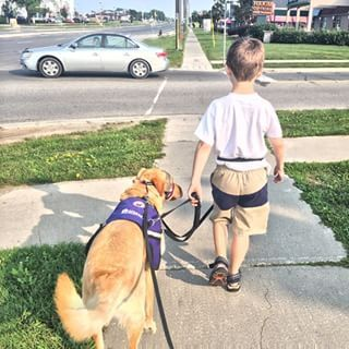 Autism Assistance Dogs | 8 Types Of Service Dogs We Should Be Grateful For