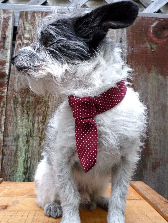 thwap -- vintage tie collar for dogs!