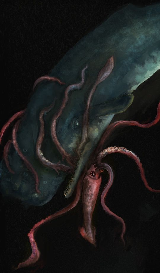 Sperm whale fighting giant squid