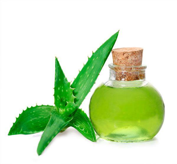 top 10 benefits of Aloe Vera. It has antibacterial and anti-viral properties…