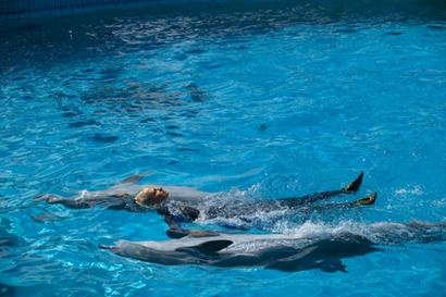 Swim with dolphins in California - done this one :)