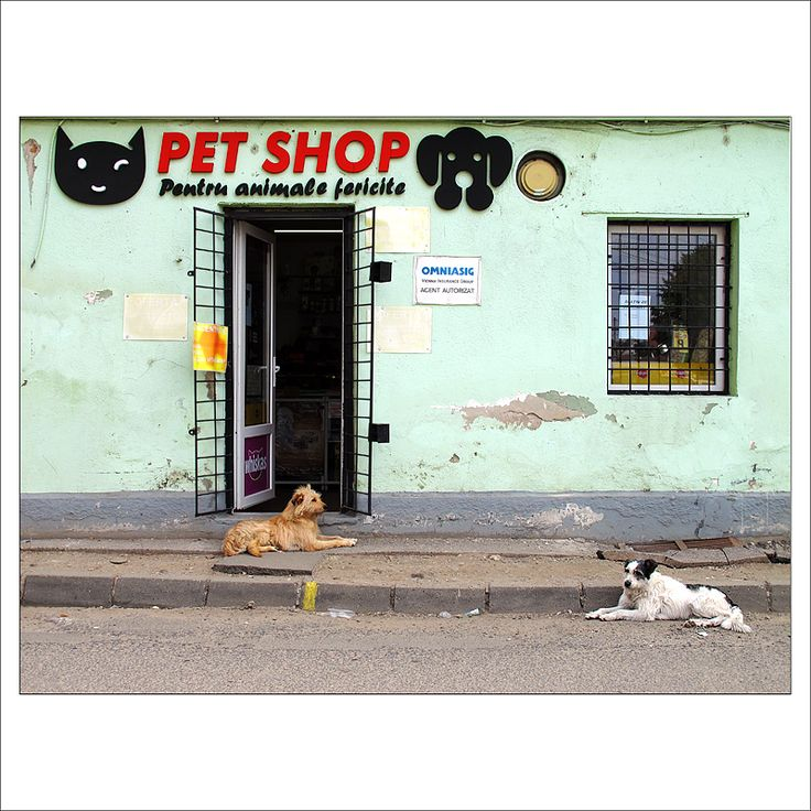 pets shopping for pets