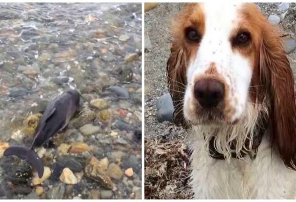 Teneri cuccioli Notizie: IL CANE LEIA SALVA UN PICCOLO DELFINO/VIDEO