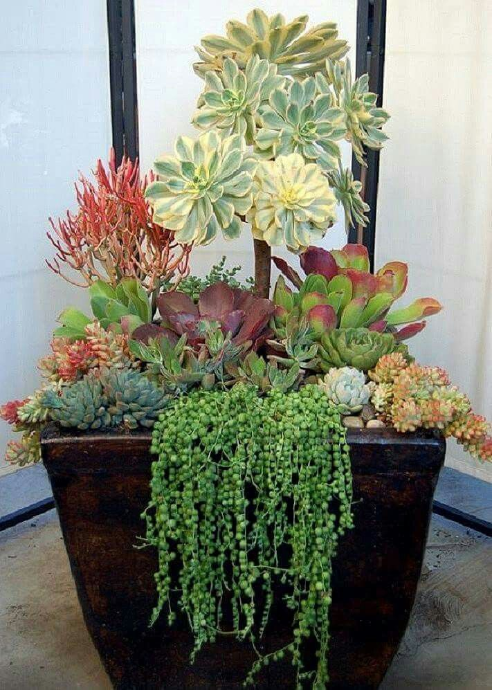 Large Succulent Containers Large Succulent Containers Grosse Saftige Behalter Grands Recipients Succ In 2020 Succulents In Containers Small Succulents Succulents