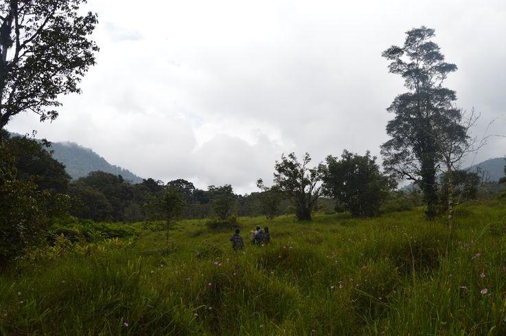 Kerinci Summit: Ladeh Panjang Marshland