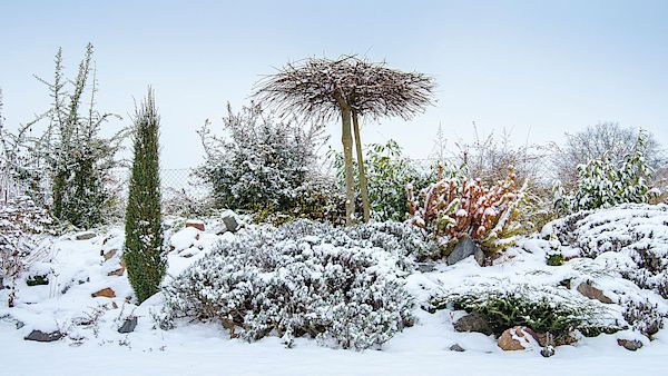 Půvab rozmanitosti. Pečlivost, s jakou majitelé zahradu naplánovali a osázeli, se jim štědře vrací v podobě krásné zimní podívané.