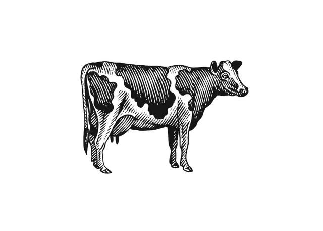 Milk Cow Woodcut