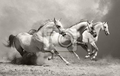 Wall Mural white horses in dust