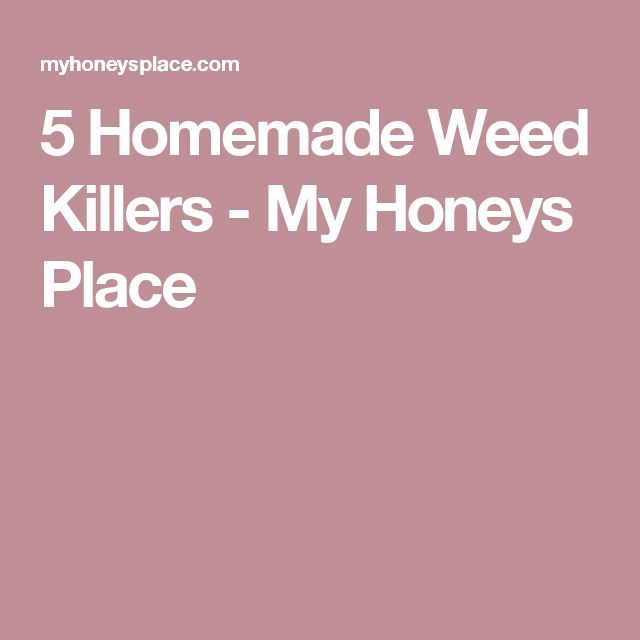 5 Homemade Weed Killers - My Honeys Place