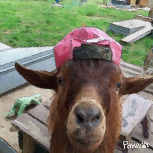 778 Best Goat Farm Images On Pinterest: 31 Best Gunter's Goat Farm Images On Pinterest
