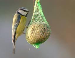 Mangiatoie per uccellini: un aiuto per l'inverno