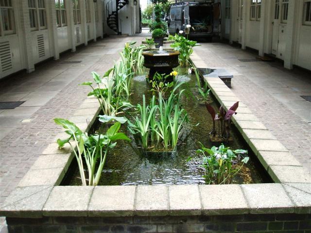 Best 25 pond construction ideas on pinterest swimming for Garden pond maintenance