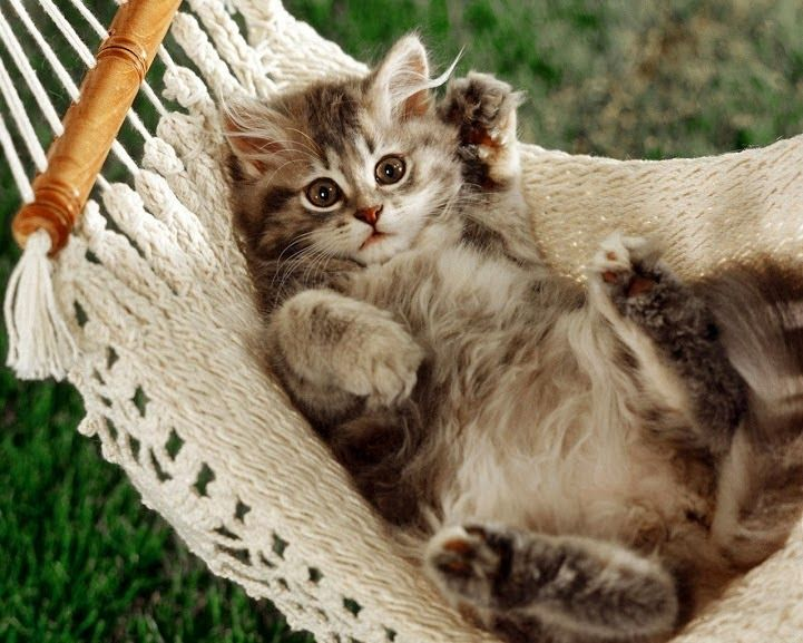 Factors to consider before you buy pet health insurance for your cat