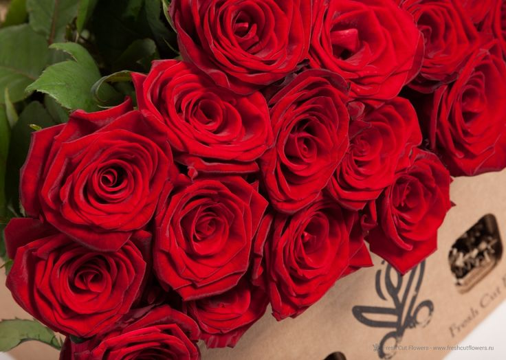 Розы бордовые в подарочной коробке
