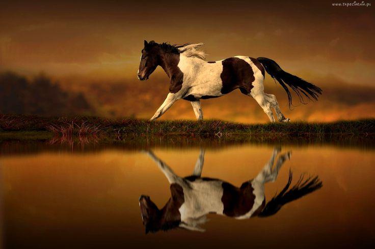 Koń, Zachód Słońca, Woda, Odbicie