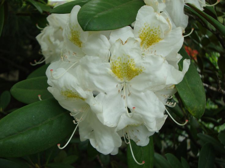 The white lady  #flower #nature #white